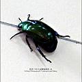 2011-0802-昆蟲課-昆蟲老師-吳沁婕 (19).jpg