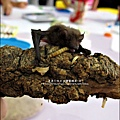 2011-0802-昆蟲課-昆蟲老師-吳沁婕 (22).jpg