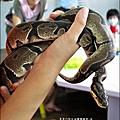 2011-0802-昆蟲課-昆蟲老師-吳沁婕 (25).jpg