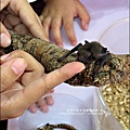 2011-0802-昆蟲課-昆蟲老師-吳沁婕 (32).jpg