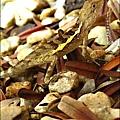 2011-0822-躲在羅漢松樹下的蜥蝪 (4).jpg