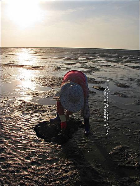 2011-0926-新竹-香山濕地挖蛤蜊 (7).jpg