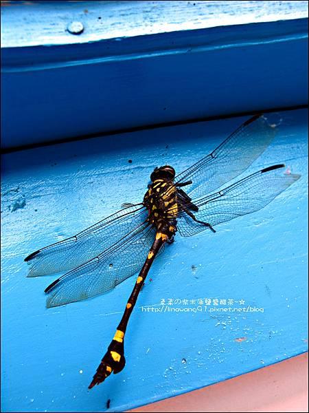 2011-0826-竹北-善水草塘-吃喝篇 (3).jpg