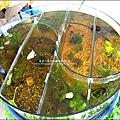 2011-0826-竹北-善水草塘-生態導覽篇 (1).jpg