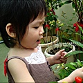 2009-0703-Yuki 2Y6M採辣椒.jpg