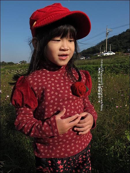 2011-1204-新埔-大蒜餃子館-波斯菊花 (5).jpg