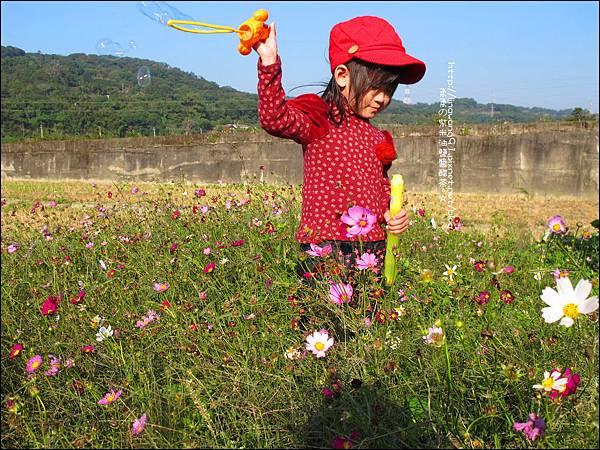2011-1204-新埔-大蒜餃子館-波斯菊花 (7).jpg
