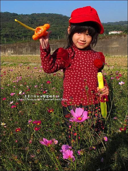 2011-1204-新埔-大蒜餃子館-波斯菊花 (9).jpg