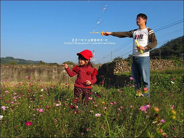 2011-1204-新埔-大蒜餃子館-波斯菊花 (10).jpg