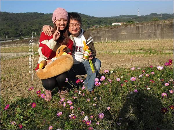 2011-1204-新埔-大蒜餃子館-波斯菊花 (13).jpg