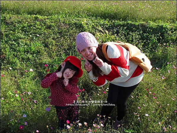 2011-1204-新埔-大蒜餃子館-波斯菊花 (14).jpg