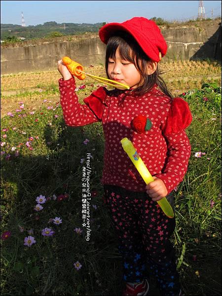 2011-1204-新埔-大蒜餃子館-波斯菊花 (20).jpg