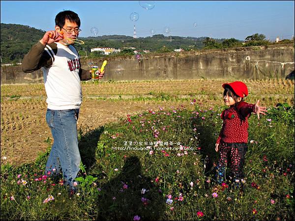 2011-1204-新埔-大蒜餃子館-波斯菊花 (22).jpg