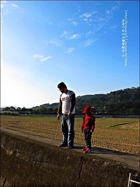 2011-1204-新埔-大蒜餃子館-波斯菊花 (24).jpg
