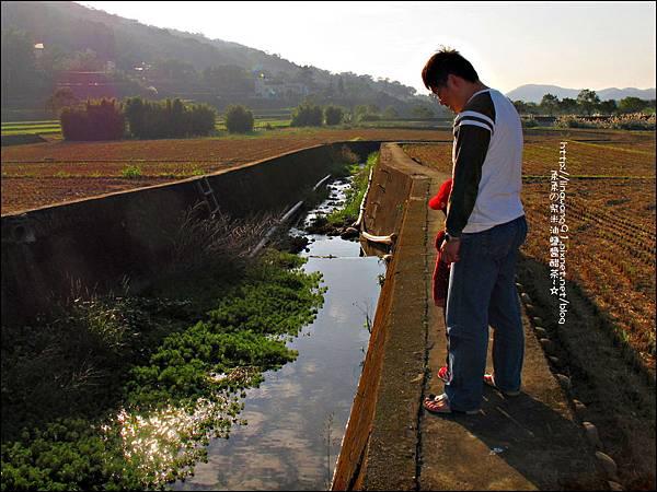2011-1204-新埔-大蒜餃子館-波斯菊花 (25).jpg