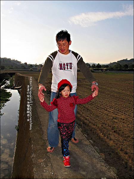 2011-1204-新埔-大蒜餃子館-波斯菊花 (26).jpg