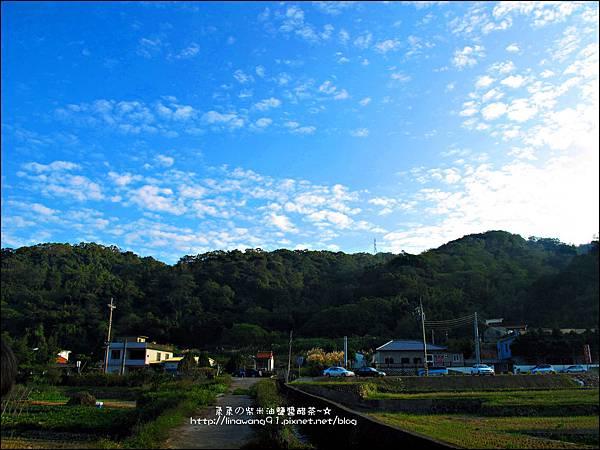 2011-1204-新埔-大蒜餃子館-波斯菊花 (27).jpg