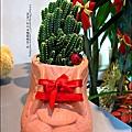 2012-0118-聖誕節-過年佈置-多肉植物 (7).jpg
