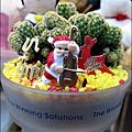 2012-0118-聖誕節-過年佈置-多肉植物 (9).jpg