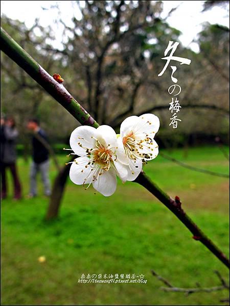 2012-0128 -清大梅園.jpg