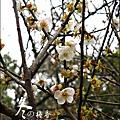 2012-0128 -清大梅園 (1).jpg
