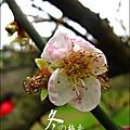 2012-0128 -清大梅園 (2).jpg