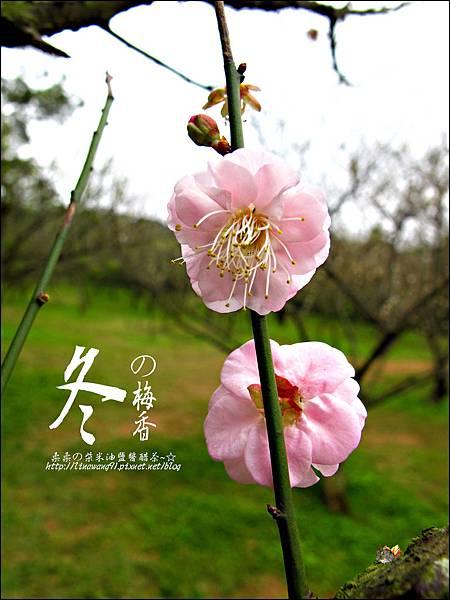 2012-0128 -清大梅園 (3).jpg