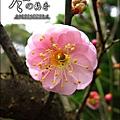 2012-0128 -清大梅園 (5).jpg