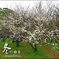 2012-0128 -清大梅園 (10).jpg