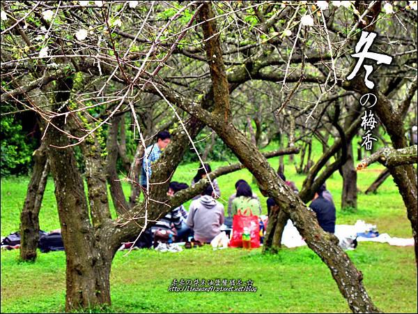 2012-0128 -清大梅園 (11).jpg