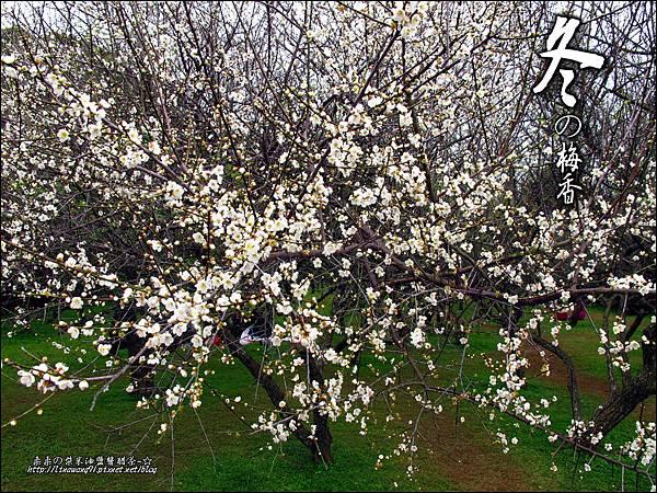 2012-0128 -清大梅園 (13).jpg