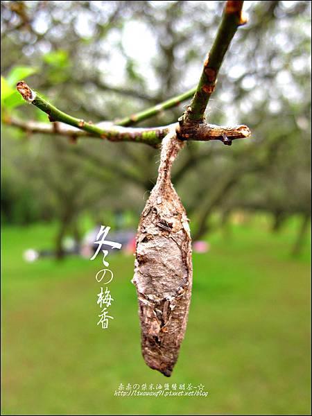 2012-0128 -清大梅園 (20).jpg