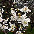 2012-0128 -清大梅園 (23).jpg