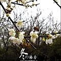 2012-0128 -清大梅園 (24).jpg