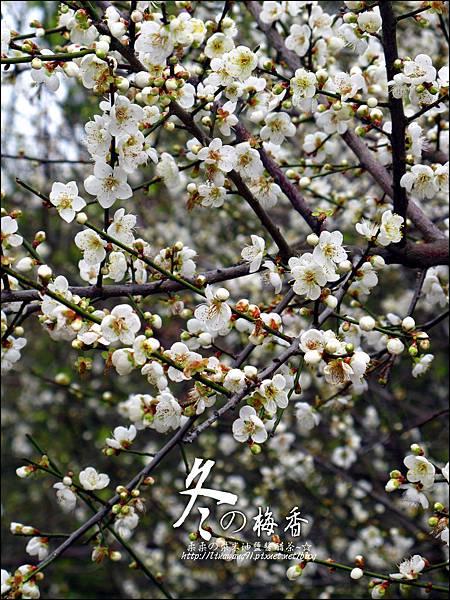 2012-0128 -清大梅園 (25).jpg