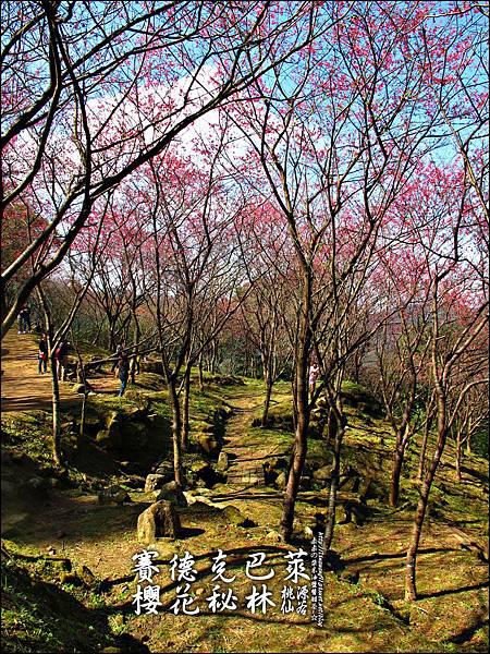 2012-0212-桃園-桃源仙谷-賽德克巴萊的櫻花秘林 (1).jpg