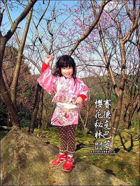 2012-0212-桃園-桃源仙谷-賽德克巴萊的櫻花秘林 (4).jpg