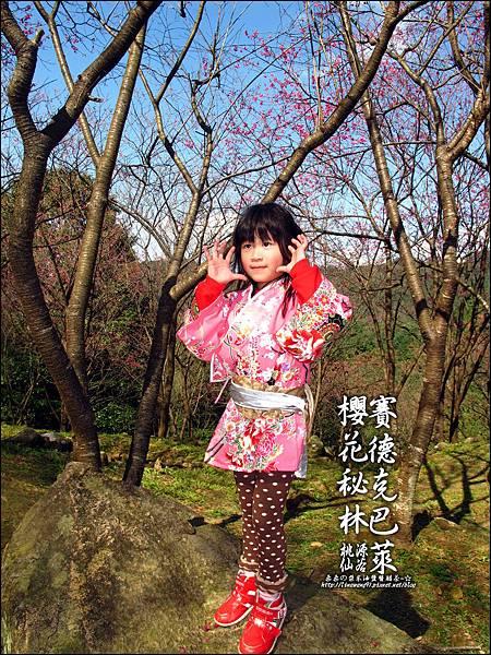 2012-0212-桃園-桃源仙谷-賽德克巴萊的櫻花秘林 (5).jpg