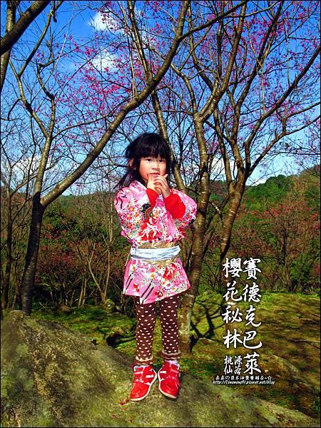 2012-0212-桃園-桃源仙谷-賽德克巴萊的櫻花秘林 (6).jpg