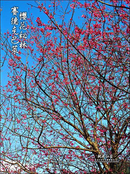 2012-0212-桃園-桃源仙谷-賽德克巴萊的櫻花秘林 (9).jpg