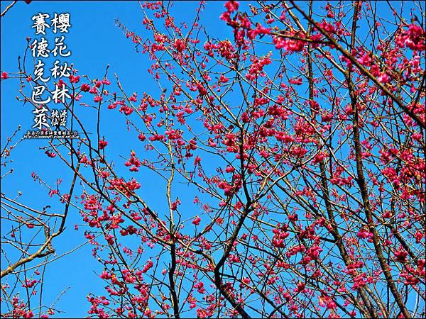 2012-0212-桃園-桃源仙谷-賽德克巴萊的櫻花秘林 (10).jpg