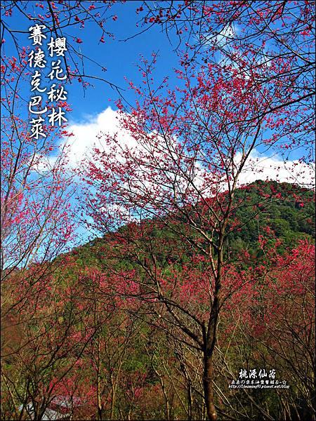 2012-0212-桃園-桃源仙谷-賽德克巴萊的櫻花秘林 (12).jpg
