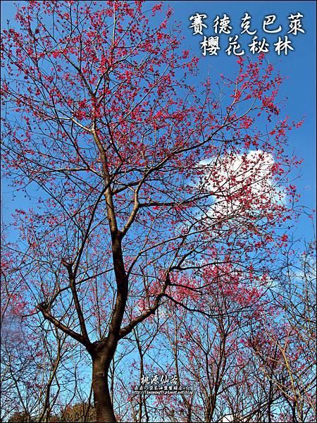 2012-0212-桃園-桃源仙谷-賽德克巴萊的櫻花秘林 (16).jpg