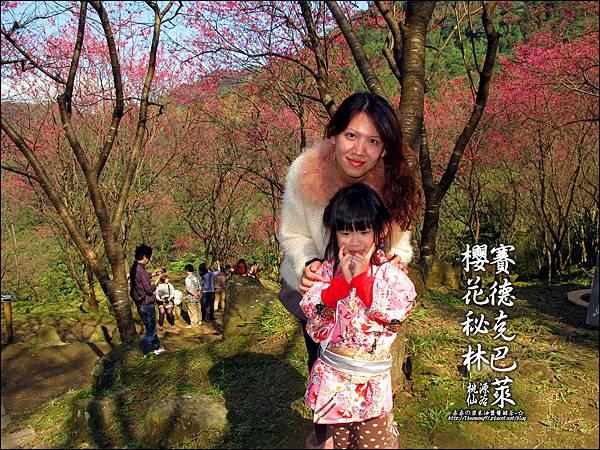 2012-0212-桃園-桃源仙谷-賽德克巴萊的櫻花秘林 (20).jpg