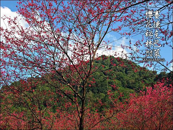 2012-0212-桃園-桃源仙谷-賽德克巴萊的櫻花秘林 (24).jpg