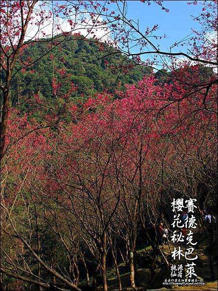 2012-0212-桃園-桃源仙谷-賽德克巴萊的櫻花秘林 (25).jpg