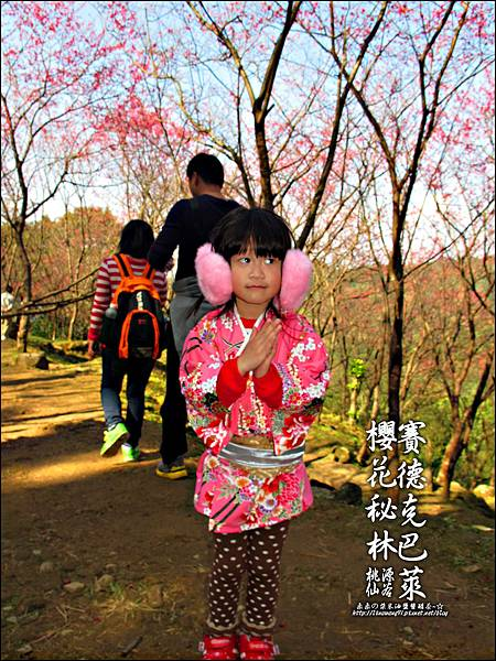 2012-0212-桃園-桃源仙谷-賽德克巴萊的櫻花秘林 (26).jpg