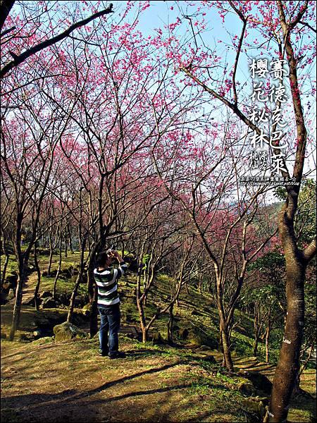 2012-0212-桃園-桃源仙谷-賽德克巴萊的櫻花秘林 (28).jpg