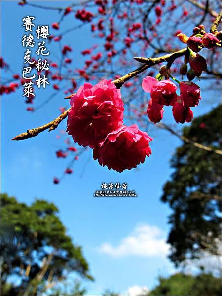 2012-0212-桃園-桃源仙谷-賽德克巴萊的櫻花秘林 (31).jpg