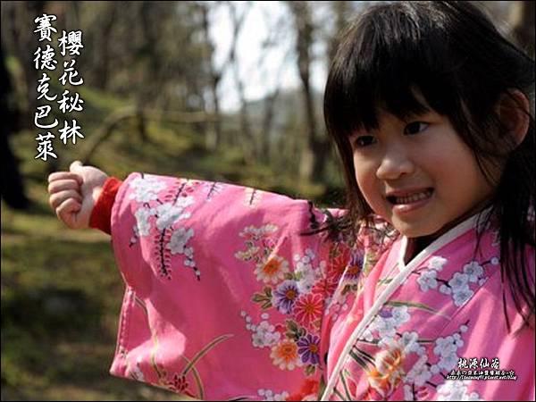 2012-0212-桃園-桃源仙谷-賽德克巴萊的櫻花秘林 (36).jpg